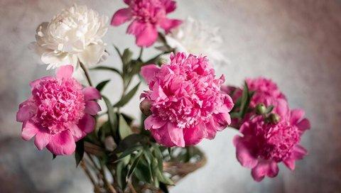 Пионы, цветы, букет, корзина, лента, размытие