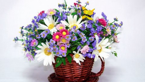 Ромашка, цветы, разные, цветок, песня, бабочка, красота
