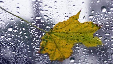 Лист, клен, капля, стекло, мокрый