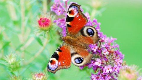 Бабочка, крылья, цветы, узоры