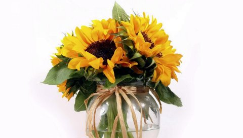 Подсолнухи, цветок, лист, ваза, лента