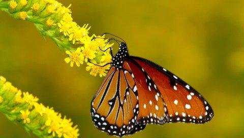 Бабочка, крылья, узоры, листья, цветы