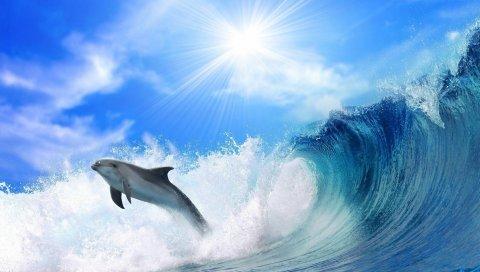 Дельфин, солнечный свет, блеск, прыжок, море
