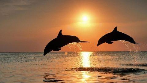 Дельфины, прыгать, пара, закат, море