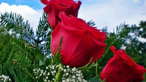 Розы, гипсофила, игла, цветок, небо
