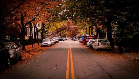 Дорога, деревья, Кембридж, автомобиль, США