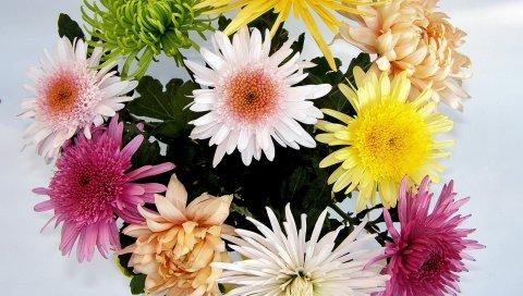 Хризантемы, цветы, букет, яркие, разные