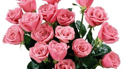 Розы, букет, розовый, капля, свежесть