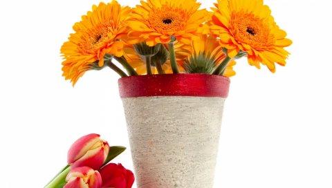 Гербера, букет, тюльпаны, цветы, ваза