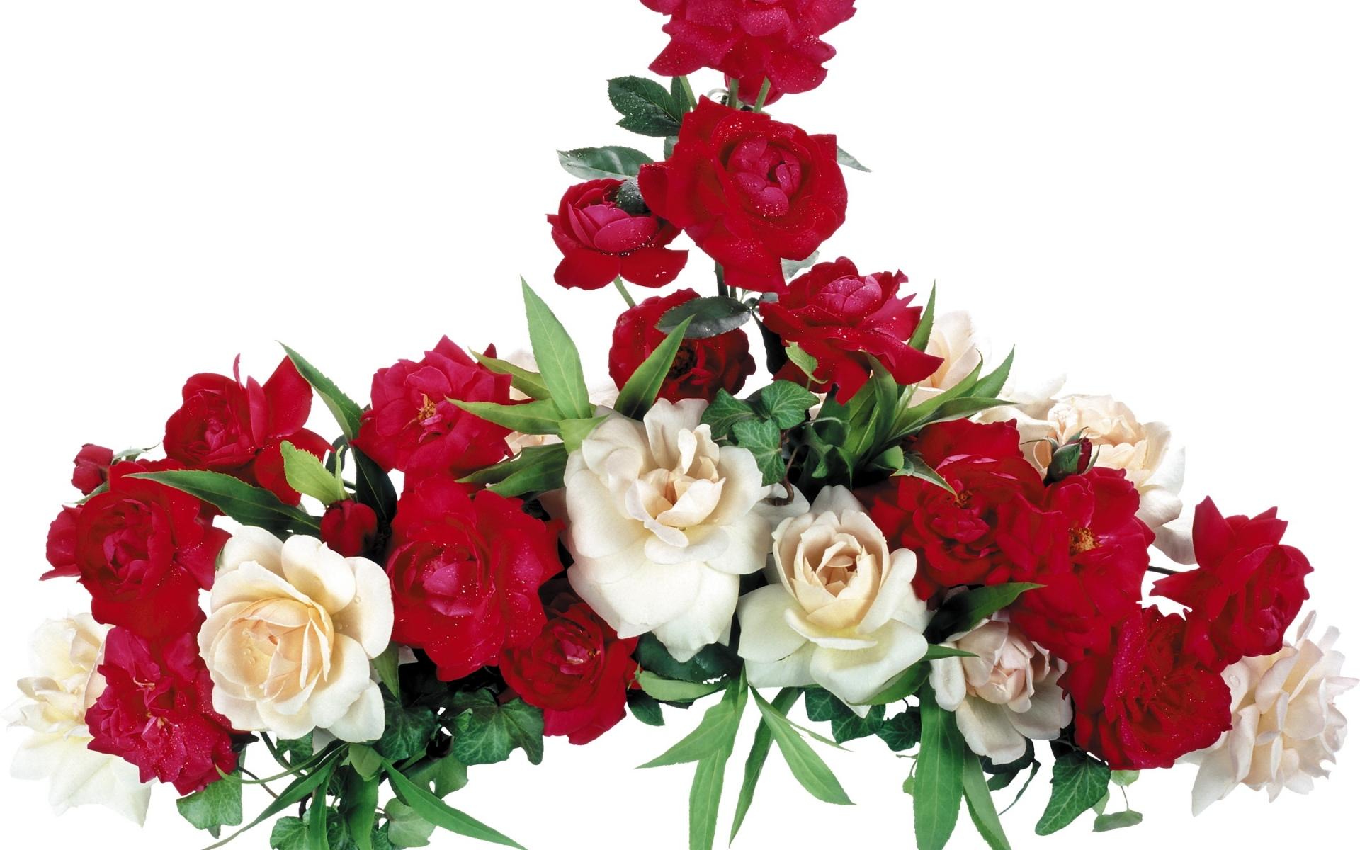 Картинки Роза, белый, красный, композиция фото и обои на рабочий стол