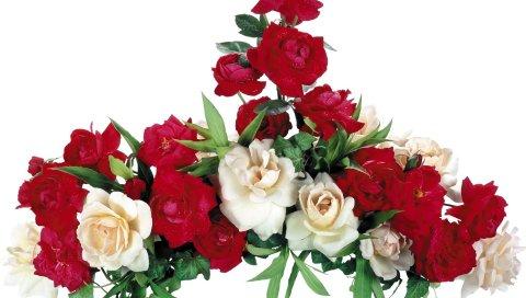 Роза, белый, красный, композиция