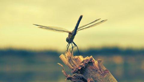 Стрекоза, насекомое, лес, полет