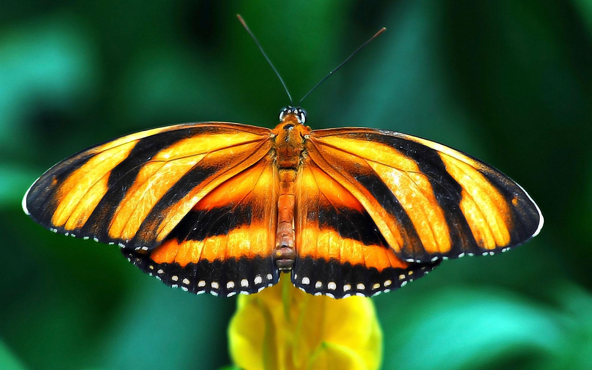 Картинки Бабочка, вид, крылья, полоса, ветка фото и обои на рабочий стол