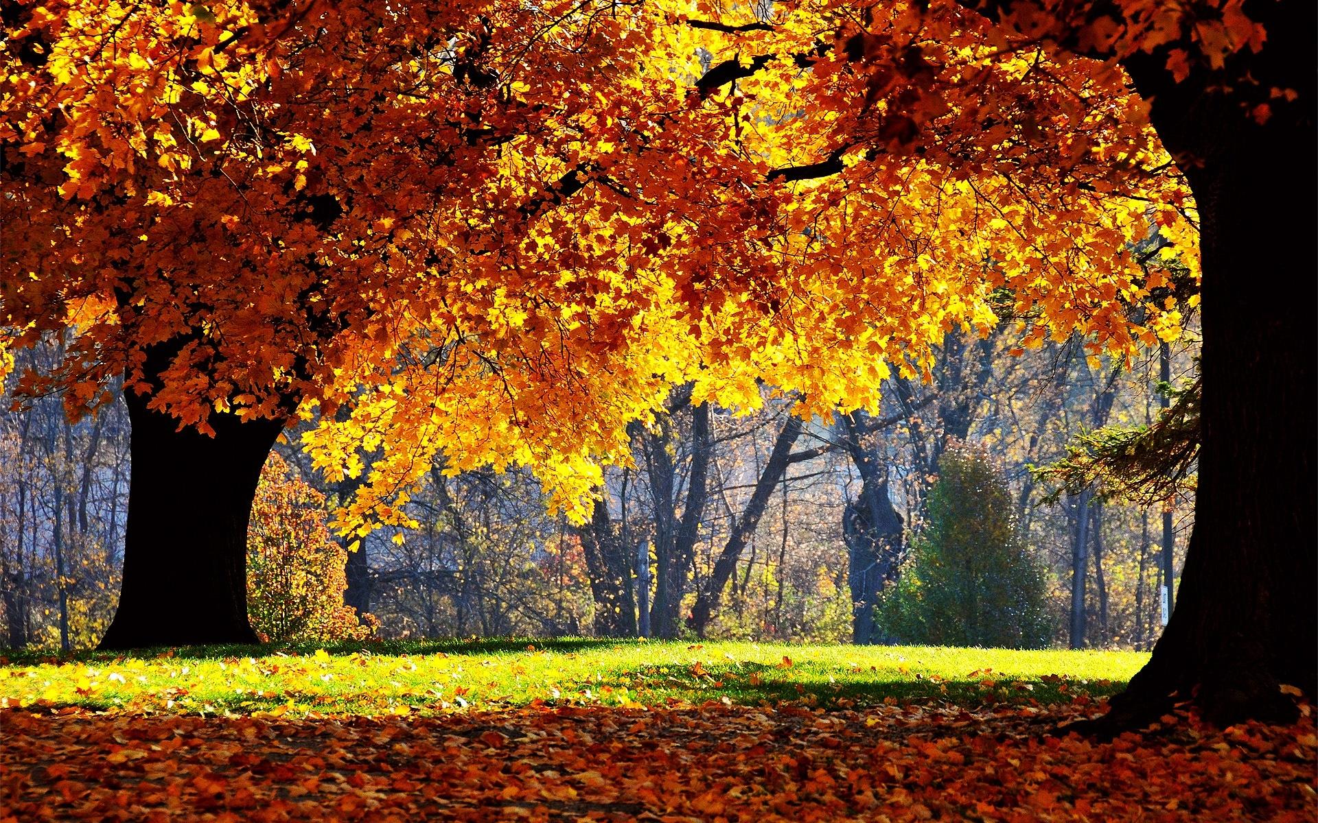Картинки Осень, деревья, листья, парк, желтый, тень фото и обои на рабочий стол