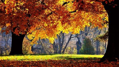 Осень, деревья, листья, парк, желтый, тень