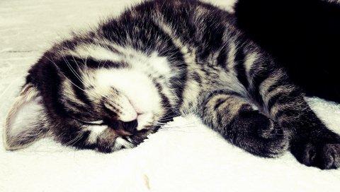 Котенок, табби, сон, кровать, черный белый