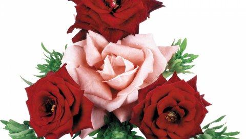 Розы, цветы, течет, букет