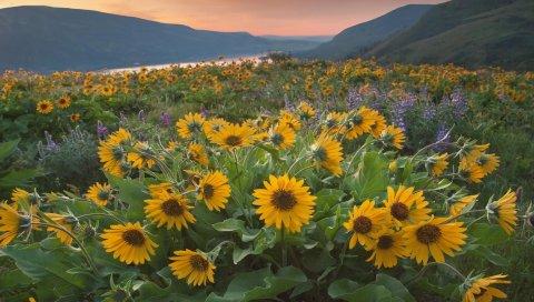 Цветы, желтый, горы, река, вечер