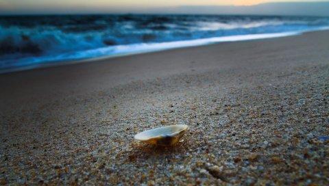 Ракушка, берег, песок, пляж, море, вечер