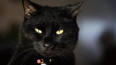 Кошка, глаза, лицо, темный, воротник