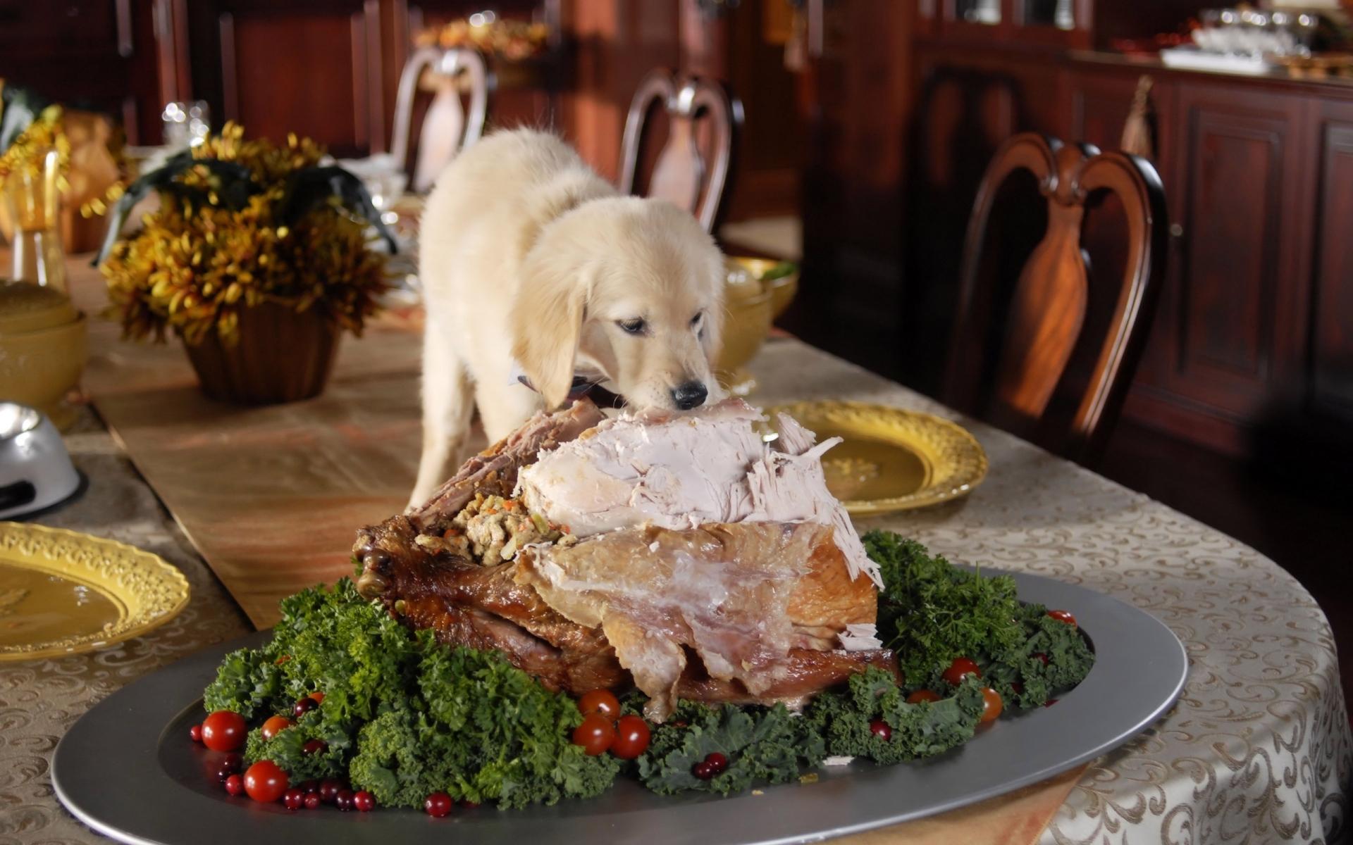 Смешные картинки еды и животных, приглашения день рождения