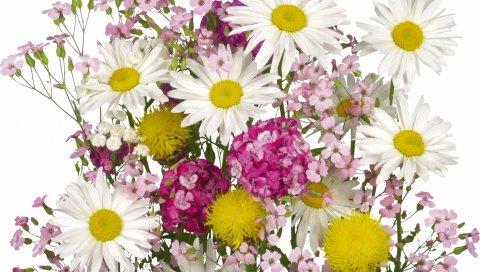 Ромашки, цветы, букет, лето