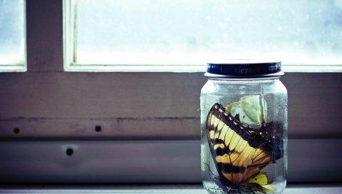 Банк, стекло, бабочка, коллекция
