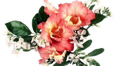 Гладиолус, цветы, букеты, листья