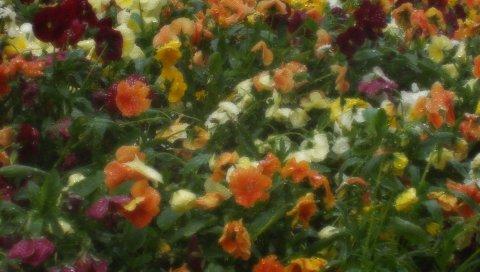 Цветы, капли, дождь, зелень, фотография