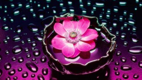 Цветок, капли, вода, ваза, фон