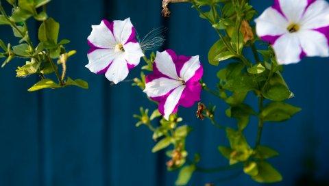 Цветы, ветки, зелень, забор