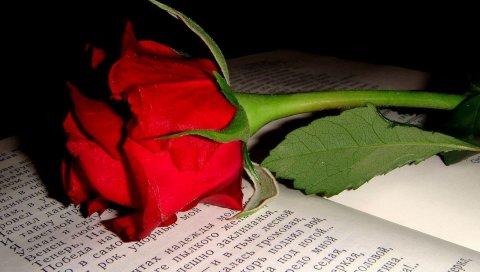 Роза, цветок, почка, книга, текст