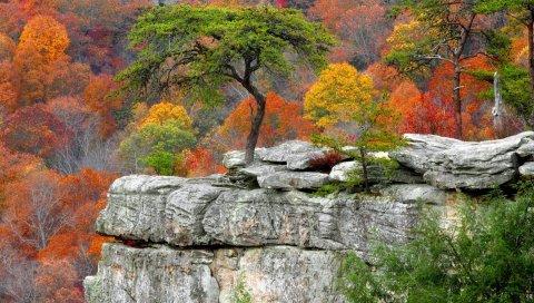 Дерево, тарелки, осень, листья