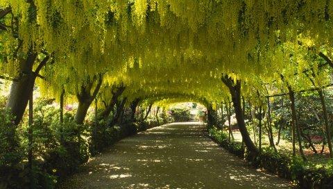 Деревья, крона, листья, навес, арка