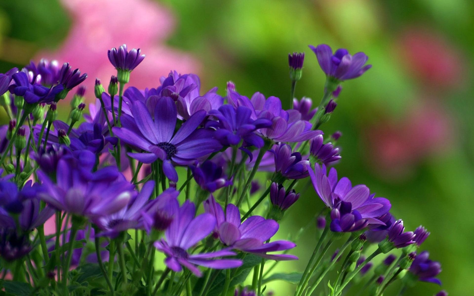 Смотреть картинки на тему цветы
