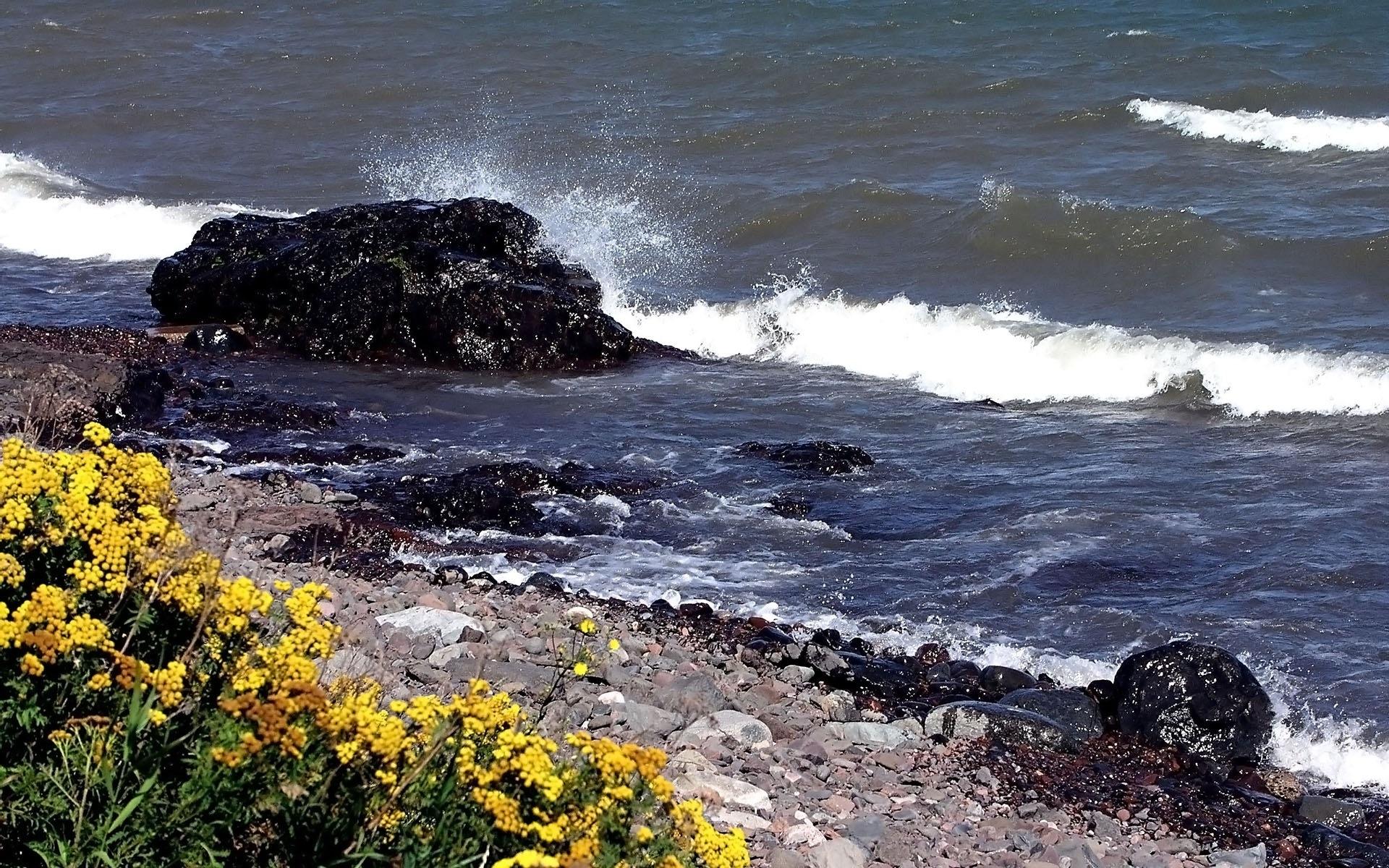Картинки Камни, берег, брызги, волны, удар, цветы фото и обои на рабочий стол