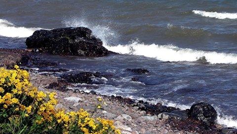 Камни, берег, брызги, волны, удар, цветы