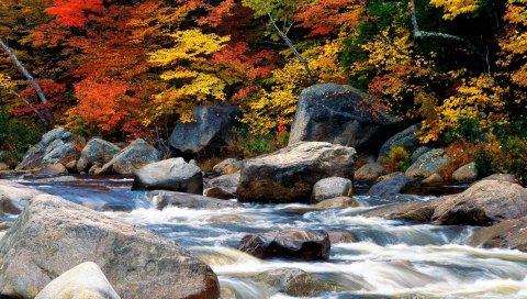 Падение, оранжевый, очертания, деревья, кусты, отражение, небо