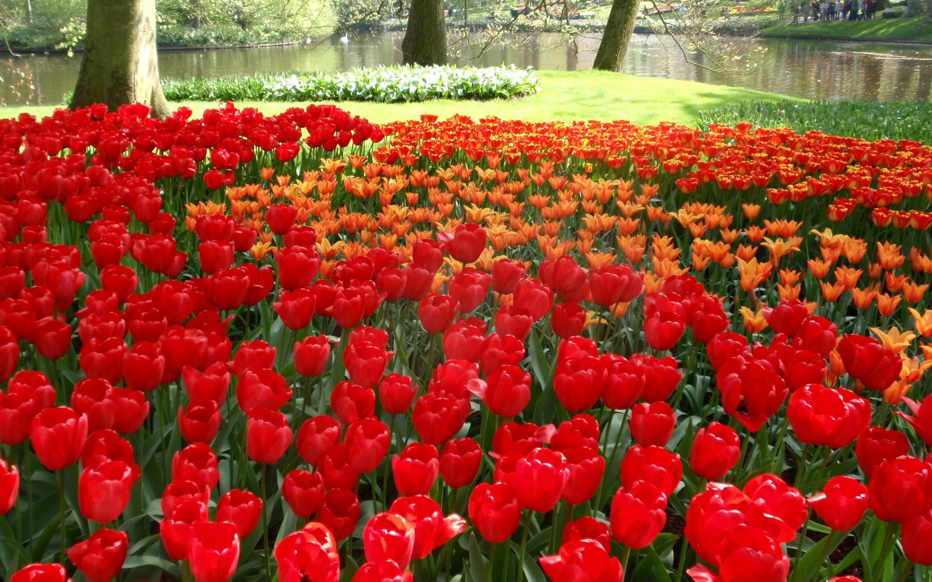 Картинки Тюльпаны, цветы, букет, бутоны, стол фото и обои на рабочий стол