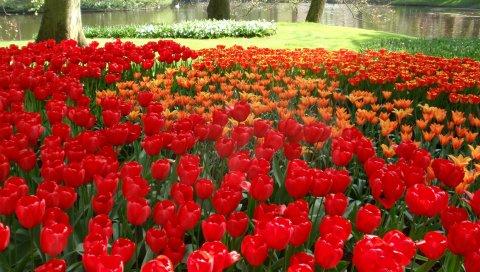 Тюльпаны, цветы, букет, бутоны, стол