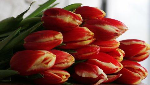 Тюльпаны, цветы, букет, красный, красиво