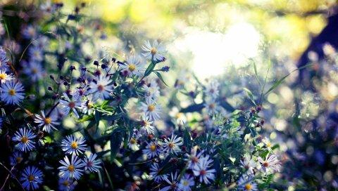 Сэньябрины, цветы, осень, размышления