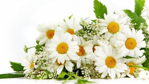 Ромашка, цветок, зеленый, лето, настроение