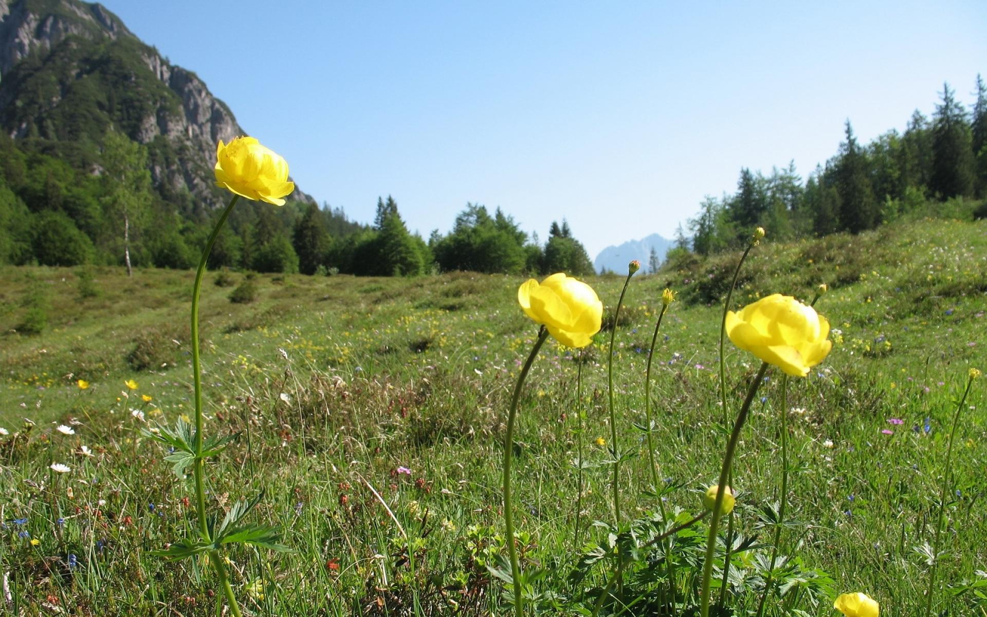 Картинки Цветы, травы, природа, горы, деревья, небо фото и обои на рабочий стол