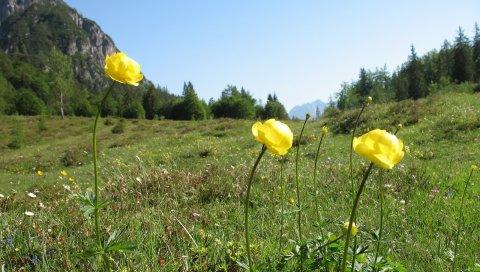 Цветы, травы, природа, горы, деревья, небо