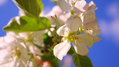 Цветы, небо, листья, тычинки