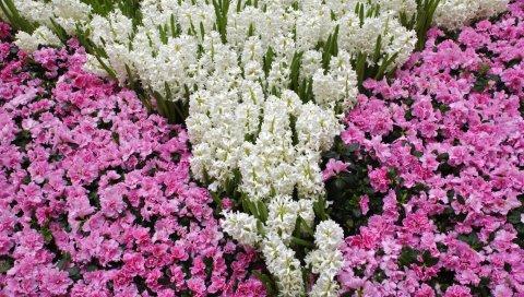 Цветы, луг, узор, листья, белый, розовый