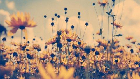 Цветы, ящик, тень, небо