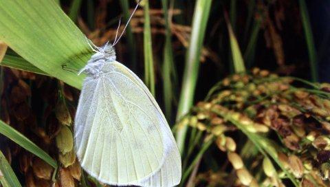 Бабочка, лист, трава, свет