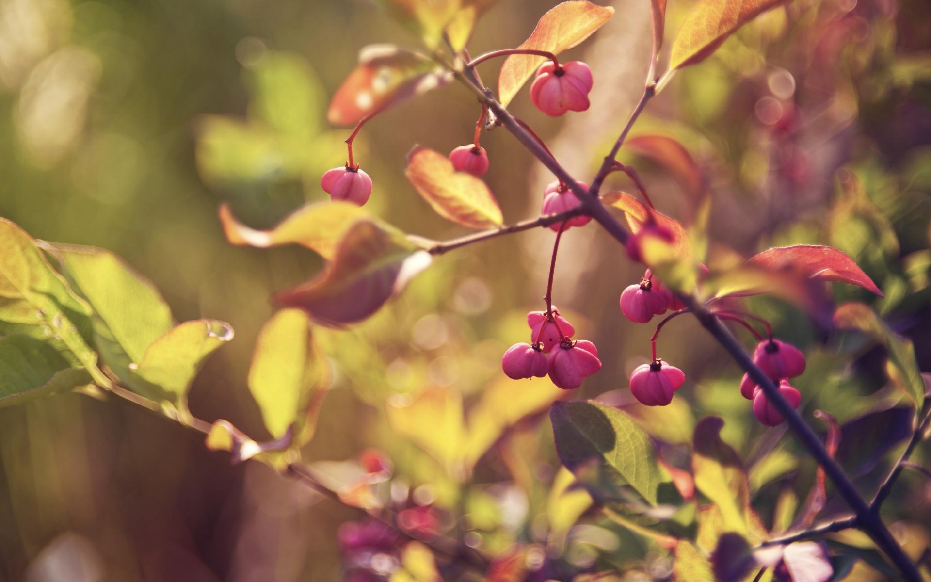 Картинки Ветви, листья, ягоды, цветы фото и обои на рабочий стол